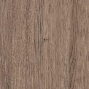 Magas Oak